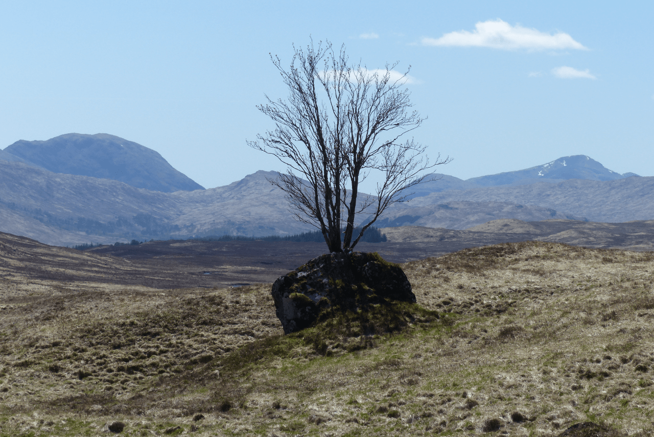 resilience_tree
